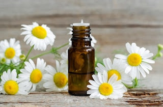 Chamomile oil - Treatment for dry eyes