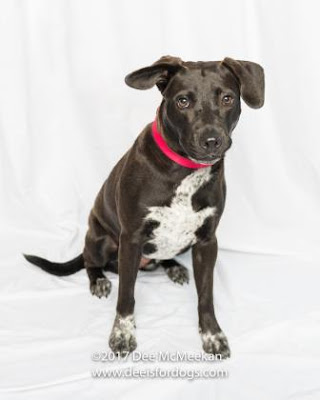 This beautiful shelter dog, Gracie has been waiting way too long for a home and a family to love.