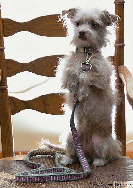 Chews Happiness Bjadim Leash & Collar for Dogs