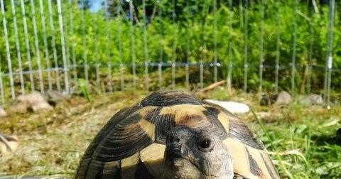 Kilpikonnan Hoito