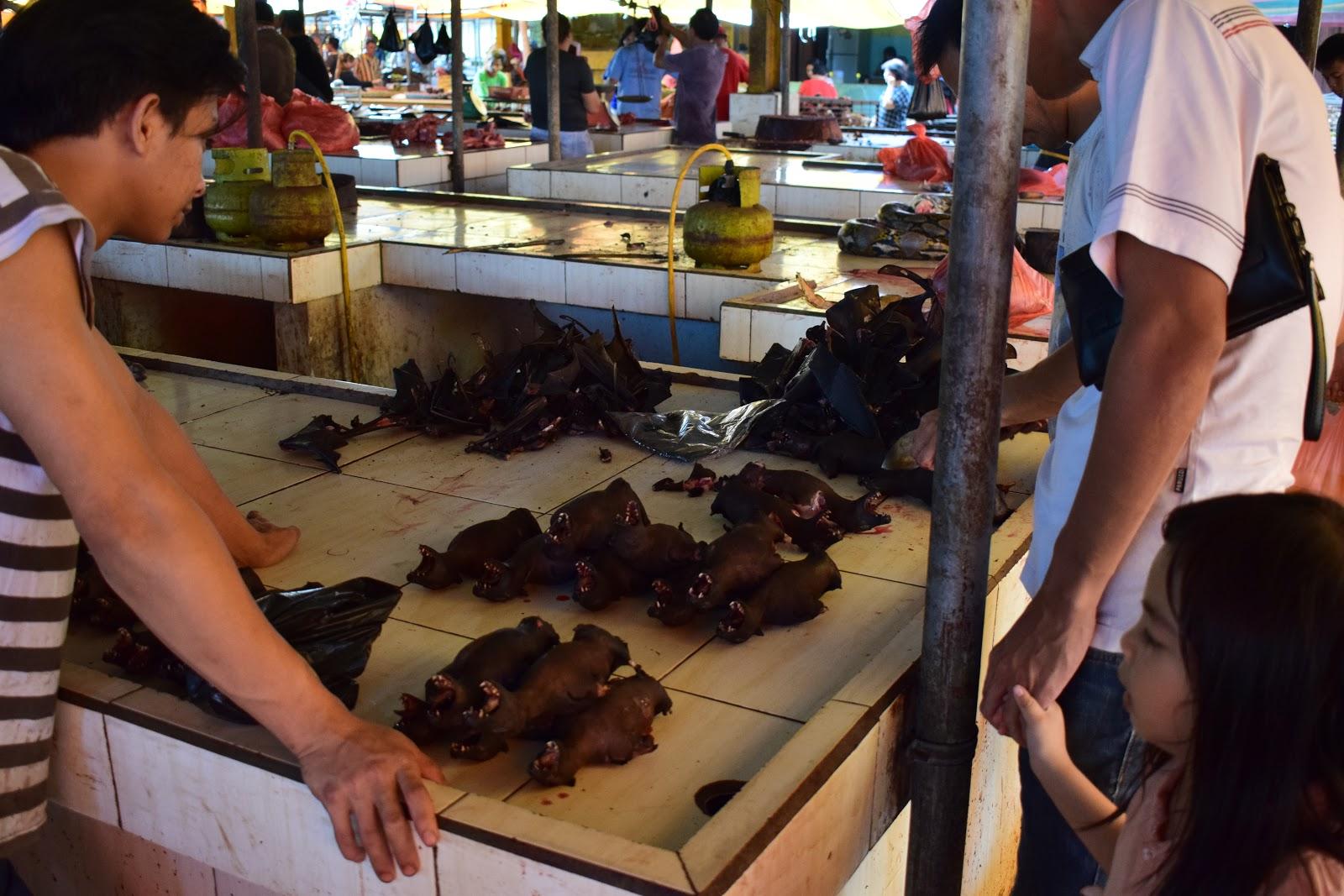 kelelawar pasar beriman