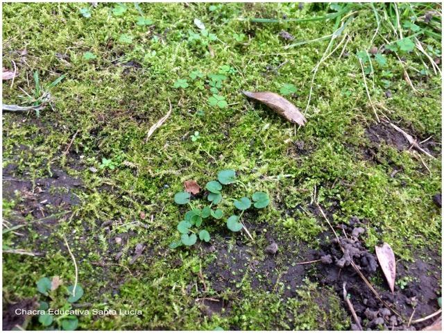 Suelo cubierto de musgo y otras plantas - Chacra Educativa Santa Lucía