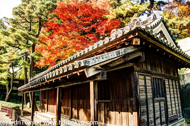 a wooden guardhouse with tiled roof. red leaves of Japanese maple
