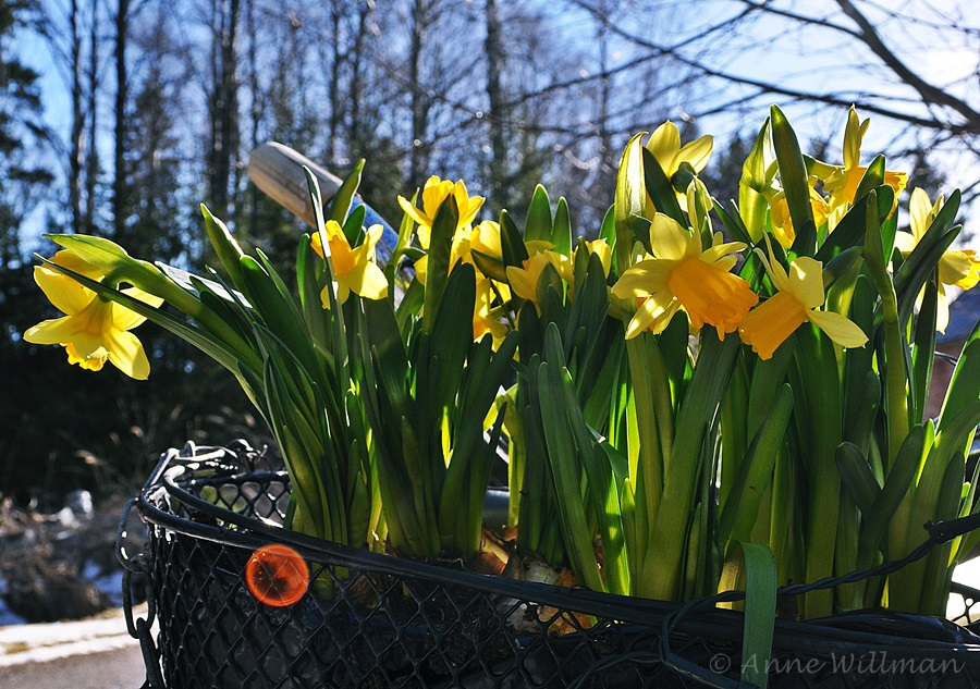 Risulinnun elämää: Kevätpäiväntasaus
