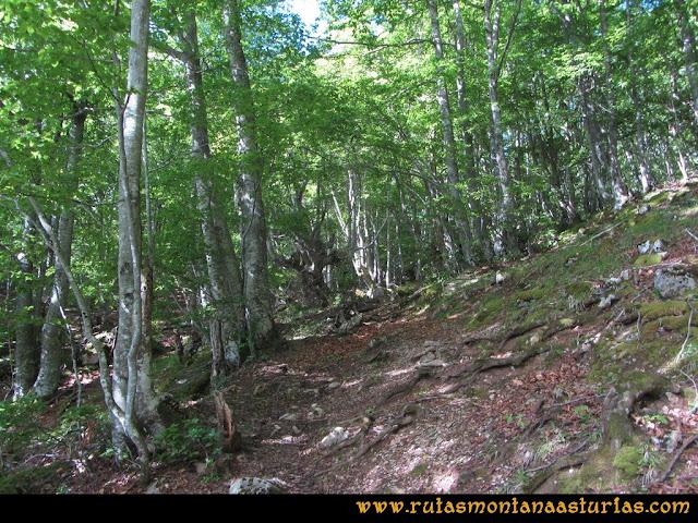 Ruta Lindes - Peña Rueda - Foix Grande: Atravesando hayedo dirección a Manín de Arriba
