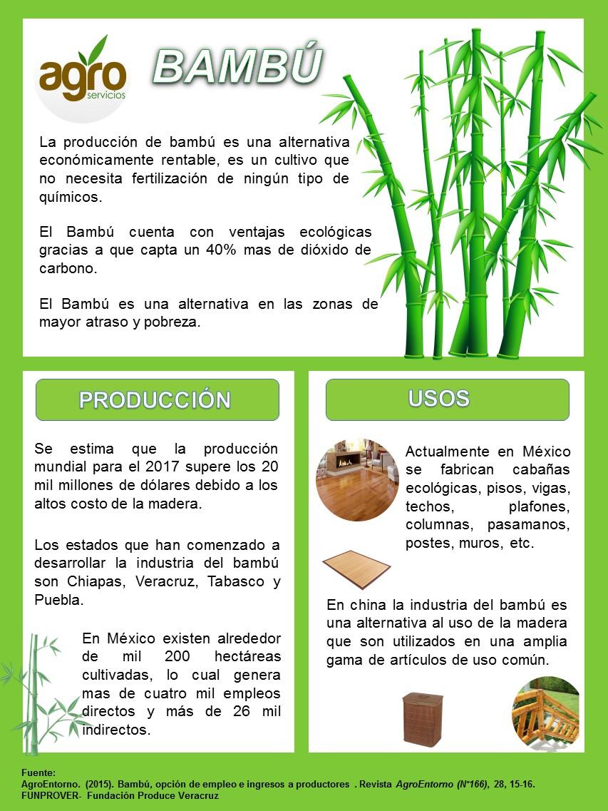 Agropapantla oportunidades en agronegocios bamb - Cultivo del bambu ...