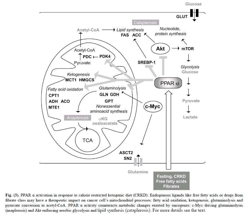 ppar alpha and ketogenic diet
