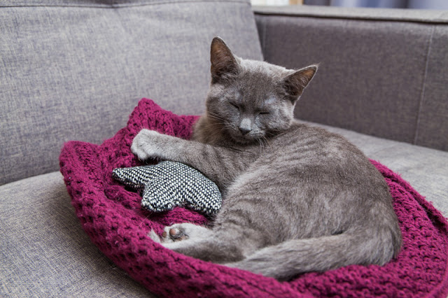 All about cats! Everything you need to know about your feline friend, like this beautiful grey cat relaxing on her bed