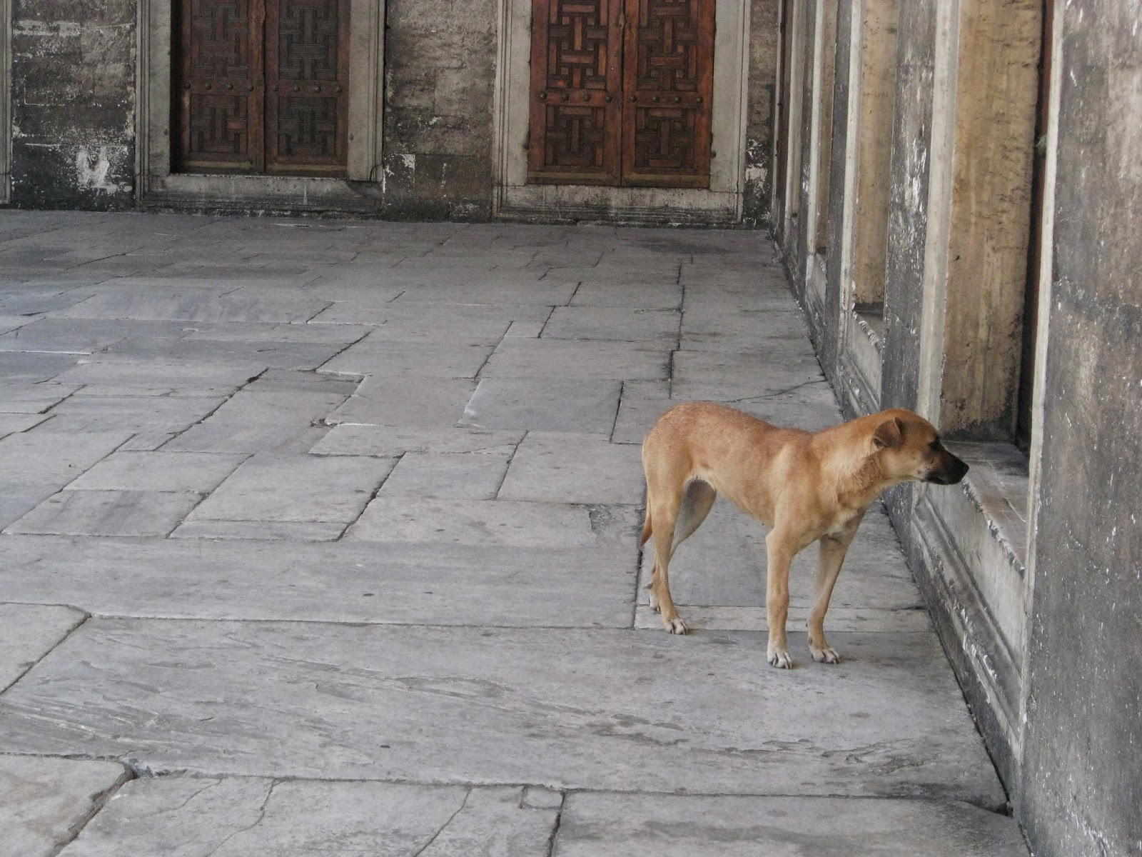 Istanbul - Stray dogs
