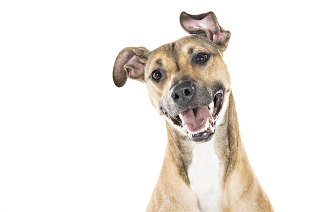Five fun things to do to make your dog happy today. Enrichment activities your dog will love. Illustrated by a portrait of a happy dog