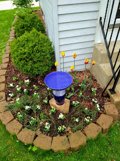 garden plot with new tulips and ground flowers
