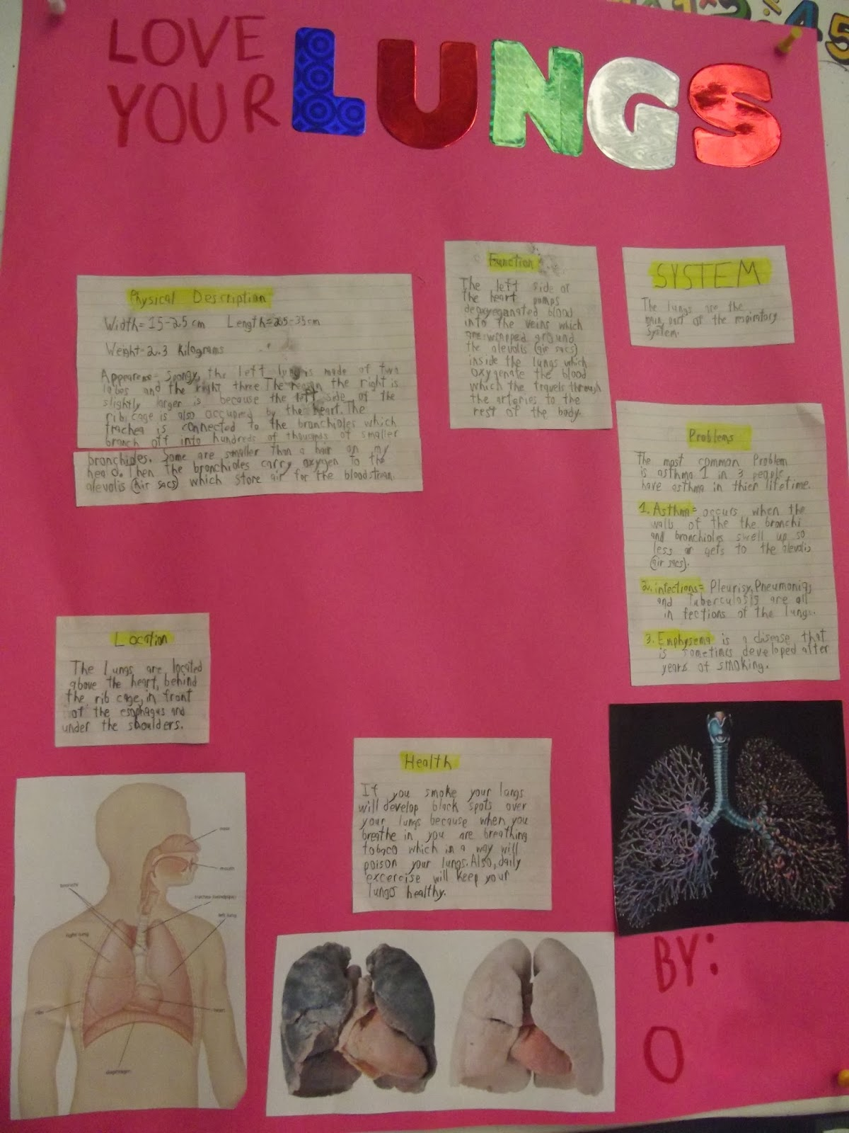 Room 13 Organs Of The Human Body Science Projects