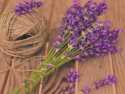 Baik saat masih segar atau pun setelah dikeringkan, lavender tetap memiliki aroma yang sama.