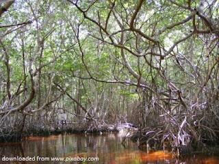 Melihat Nasib Hutan Mangrove