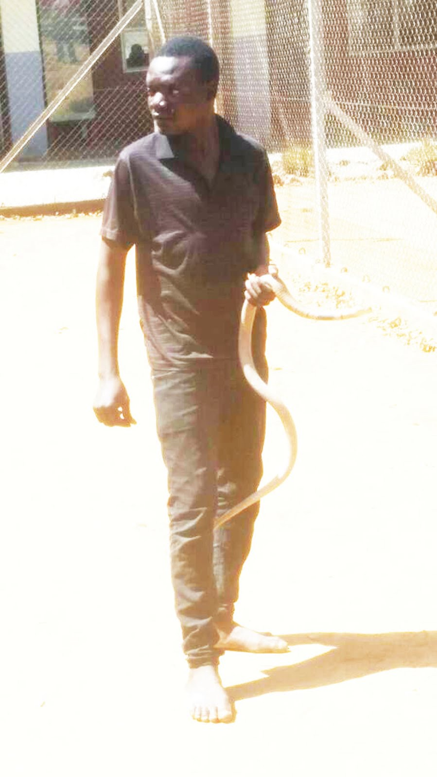 Detained Chiredzi man pleads to go and feed his snake