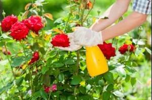 rose tree eye care