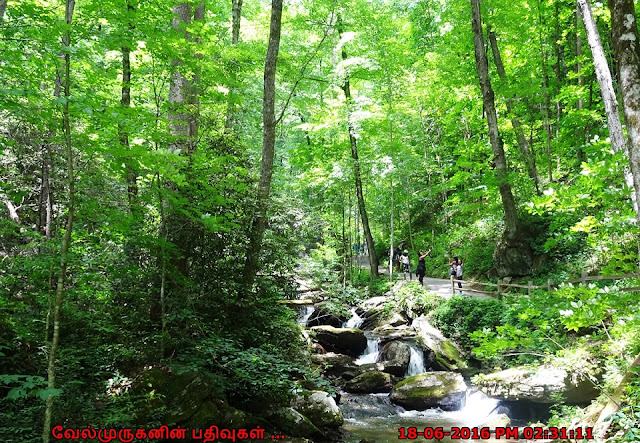 Anna Ruby Falls Trail - Unicoi State Park