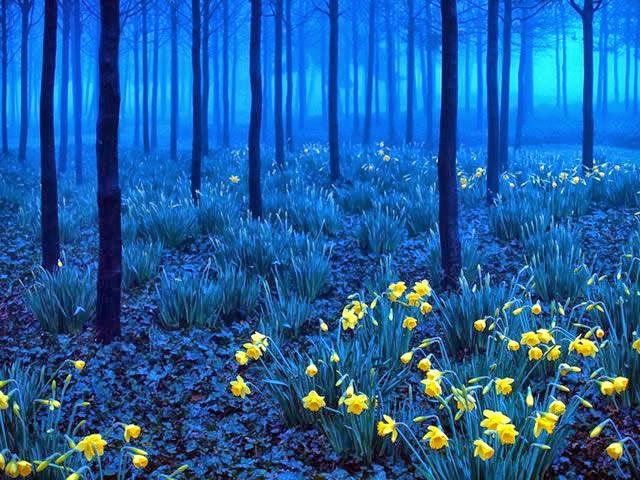 Bosque de Duendes ♦ Bosque Negro, Alemania 1