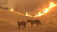 Animales muertos en el incendio de California