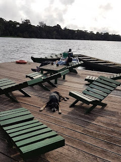 Deck alongside the river with hard chairs and resting dog