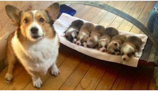 25 περήφανες μαμάδες σκυλίτσες φωτογραφίζονται πλάι στα κουτάβια τους