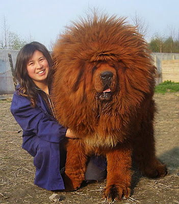 Perro gigante