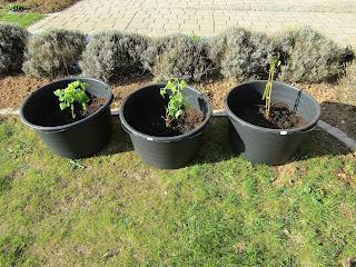 Pflanzen vom kleinen großen Glück