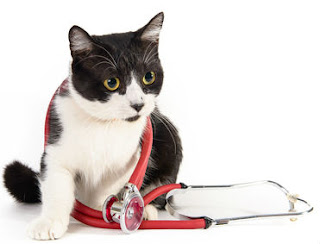 Find out whether your health insurance for cats will cover an ER visit