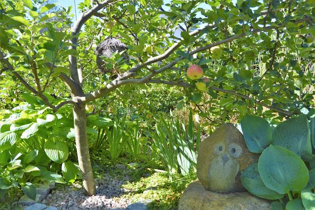 Se en hage i harmoni med seg selv - Ugle under et epletre. Furulunden.