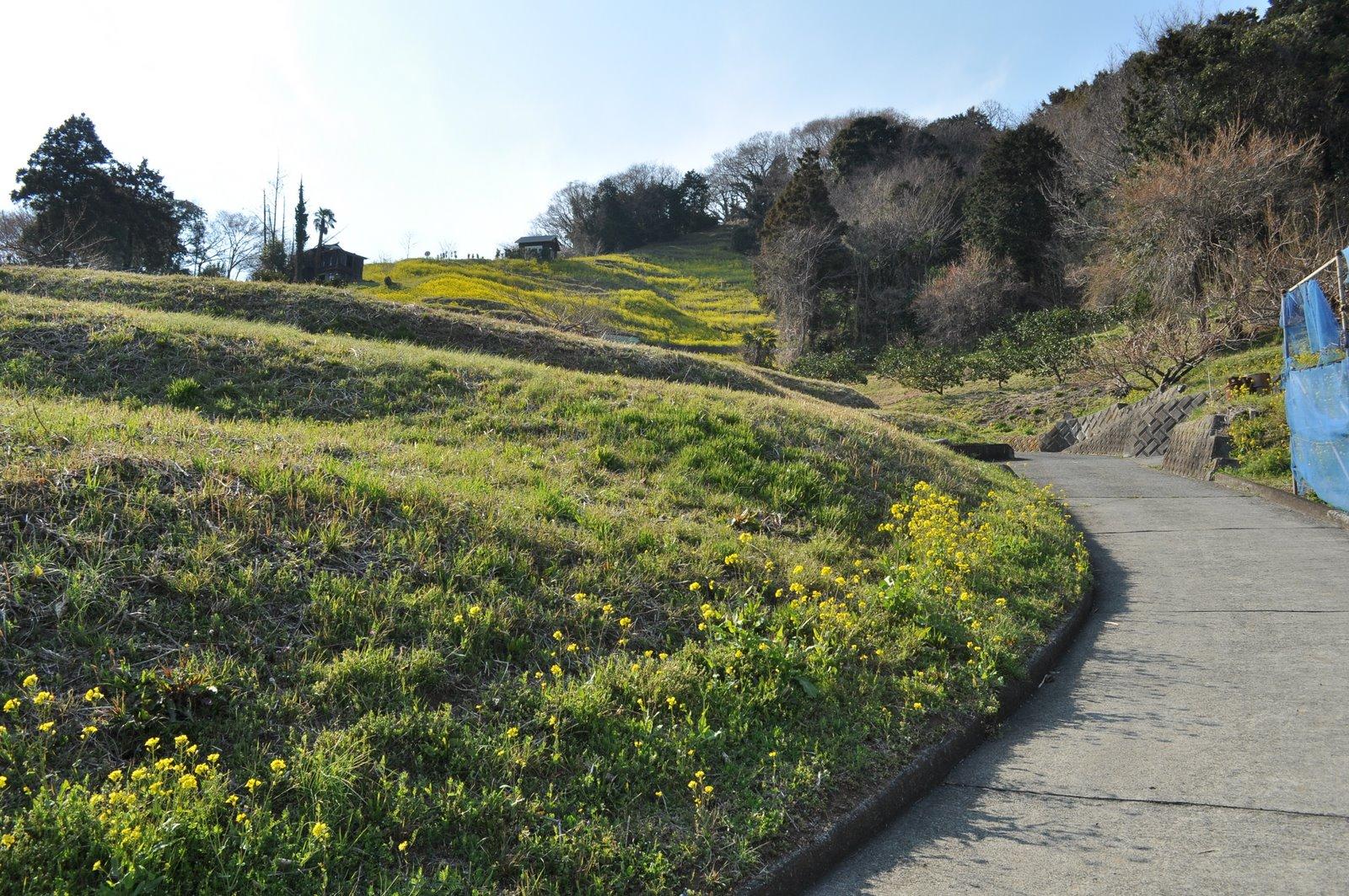 公園訪問記: 山北町浅間山 ナノハナ