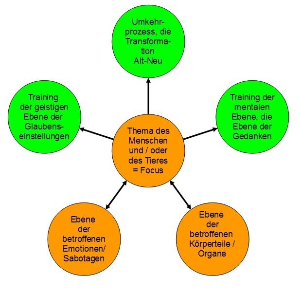 nature4horses: Energetisches Coaching