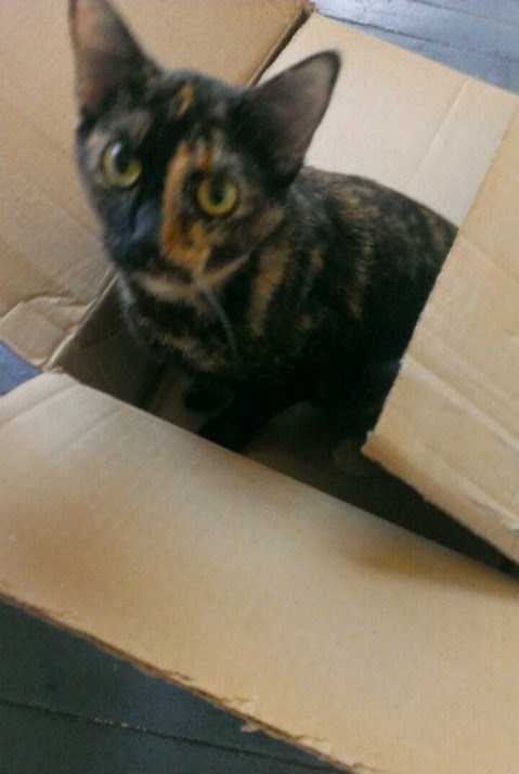 cat in box 2