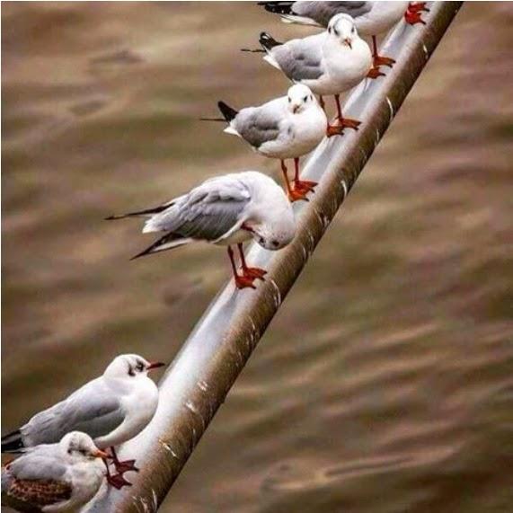 Sahabat semasa susah dan senang