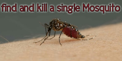 find and kill single mosquito buzzing