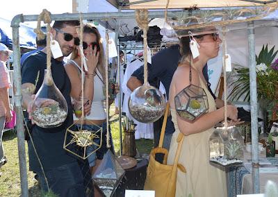 cactus, succulents, garden planters, succulent planters, Miami succulents, gardening, nature, plants, Miami, Miami garden business, garden design, terrariums