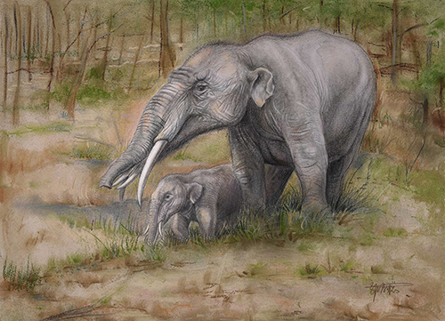 The evolution of Gomphotherium in Eurasia