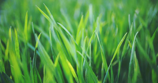 4 Fixes for a Lush Lawn