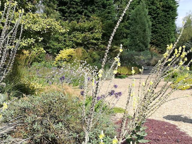 suchy ogród żwirowy, ogród angielski