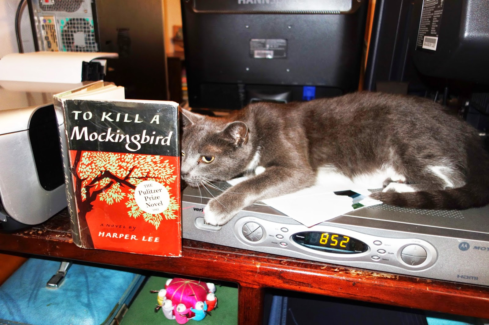 TRAVELS (and more) WITH CECILIA BRAINARD: My Cat Tesla Sad ...
