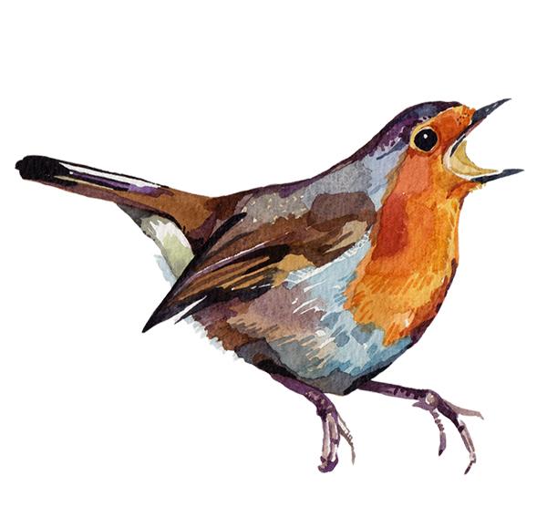 Watercolour Illustrations - Holly Exley Illustrator ...