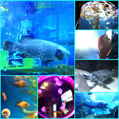 Aquaria KLCC, Things to see and do in Aquarium Kuala Lumpur, Malaysia. NBAM blog photography