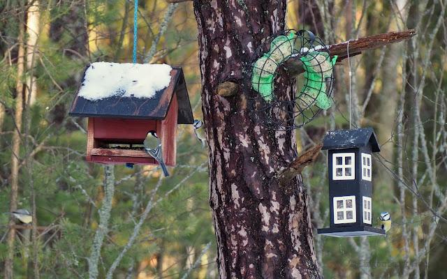lingonberryhouse, winter, leisure home, talvi, linnun ruokinta, bird feeding, tiainen