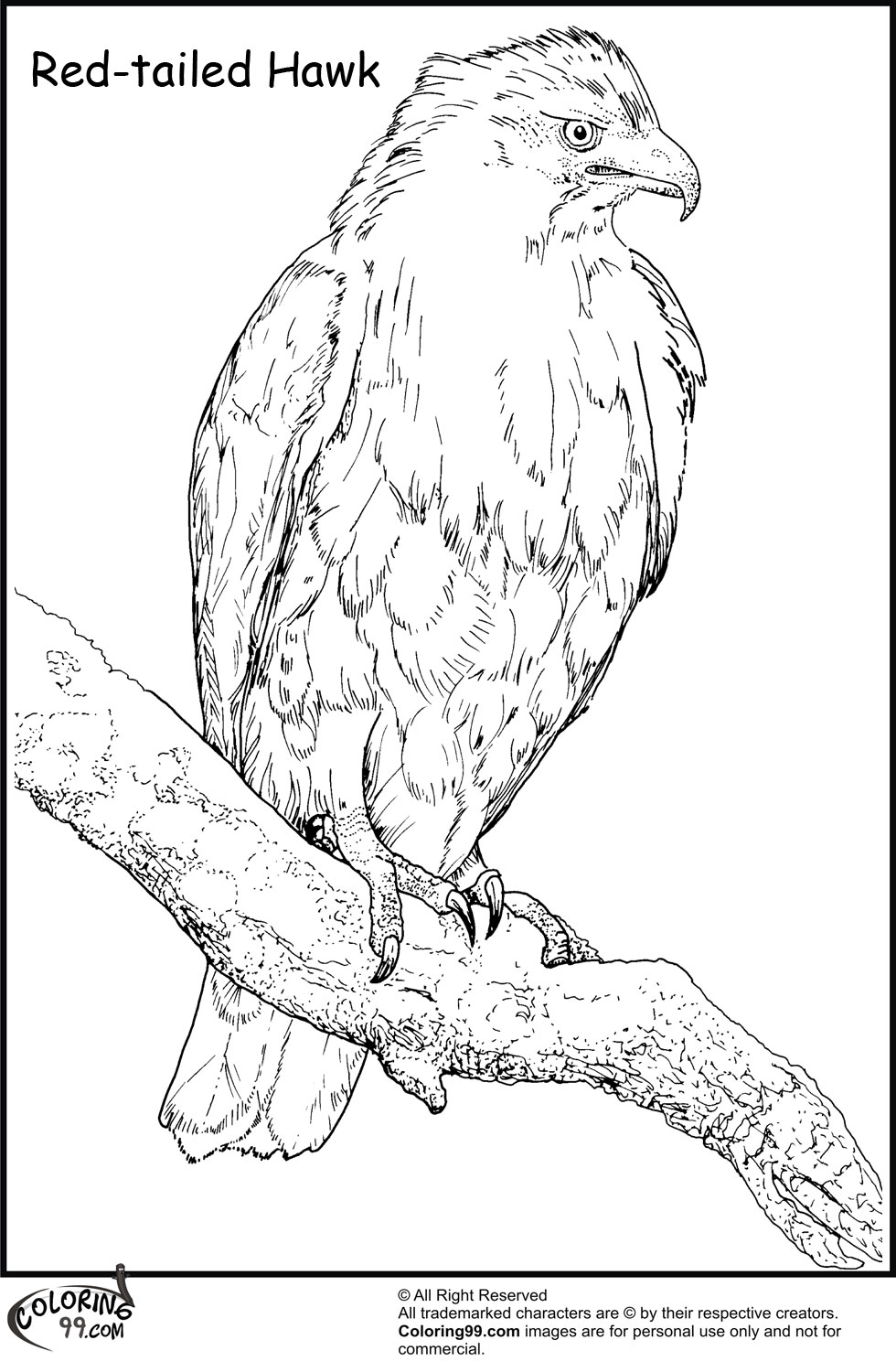 Hawk coloring pages team colors for Red tailed hawk coloring page