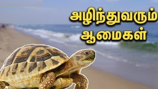 Poor Olive Ridley Turtles Dying every year | Latest News