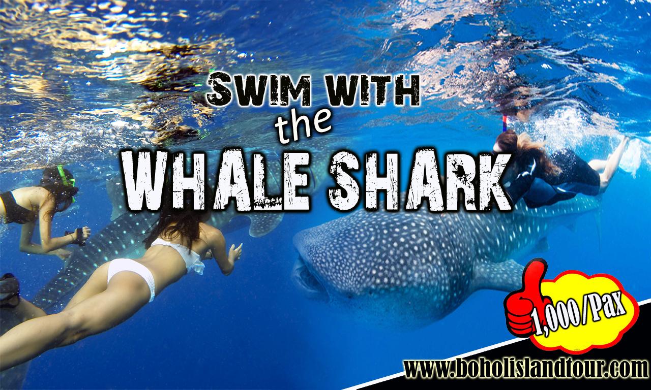 swim in oslob whale shark