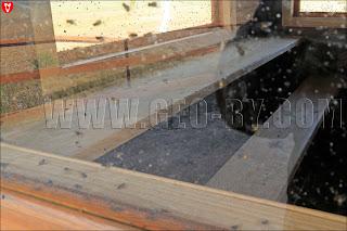 Кладбище насекомых в будке