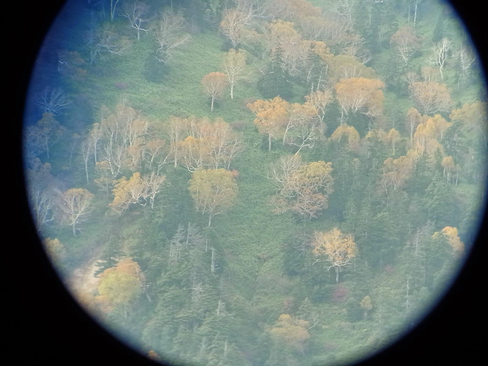 望遠鏡で見た燧ヶ岳の紅葉