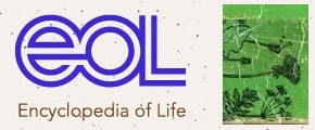 The Encyclopedia of Life (EOL)
