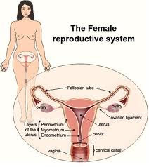 Metode Menyempitkan Vagina Dengan Cara Alami Terbukti Cepat