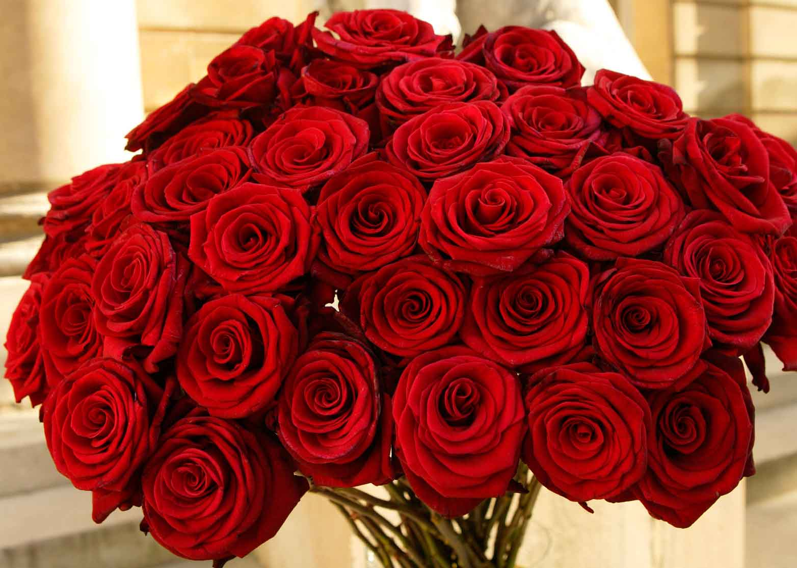 Roses for valentines day buy roses online valentines day for Buying roses on valentines day